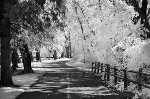 Near Infrared Photography, Boise River Greenbelt Near Broadway Blvd. and Boise State University, Downtown Boise, Idaho.