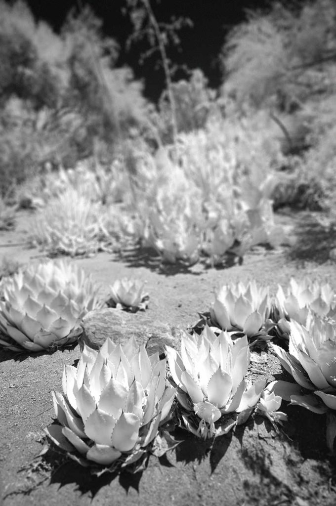 Near Infrared Photography-University of California Riverside Botanic Gardens.